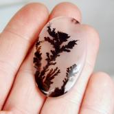 Rare and Fine Quality! Scenic Dendritic Agate! GLI